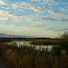 Crex marsh