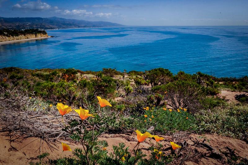 Zuma Beach-CA- 05