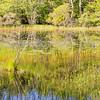 Reflections at the Bog