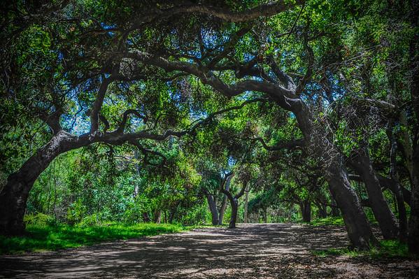 Temescal Park-CA-09