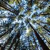 Spruce Up