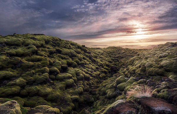 Lava Moss