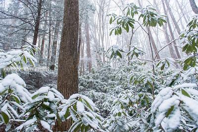 Ohiopyle Snow