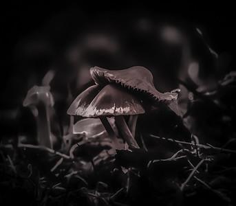 Growing in the dark
