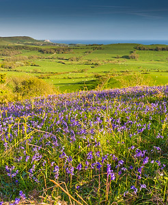 BlueBell View