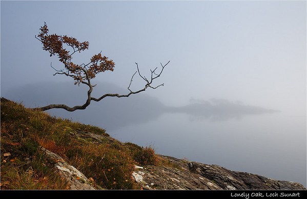 Lonely Oak, Loch Sunart