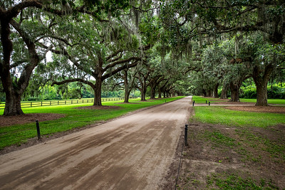 boone hall plantation oak drive