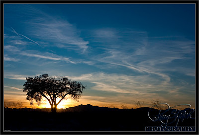 Lone Tree and Long Peak Sunset