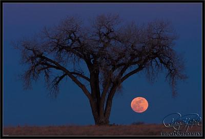 Lone Tree Moon Dance