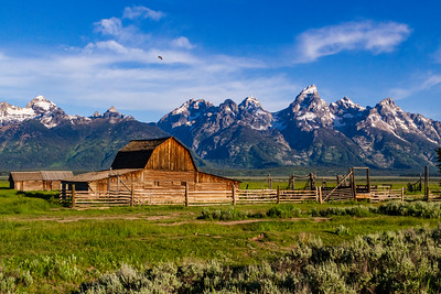 The Barn, The Bird and the Grand Tetons