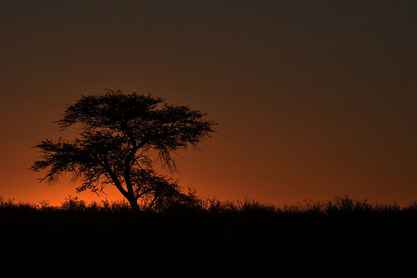 African Dawn