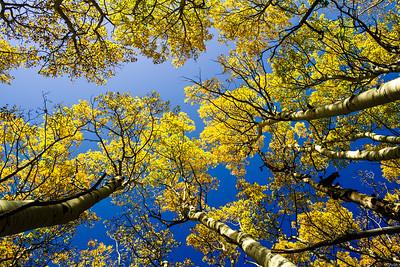 The Colorado Fall Sky