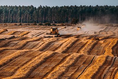 The Crops, Strzelce Kajeńskie, Poland