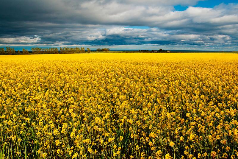 Fields, Scotland