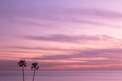 Palmtrees on sunset