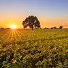Woodland Field Sunset