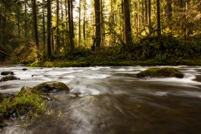 A Flowing River in Silver Falls State Park, Oregon
