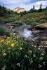 Mineral Creek Cascade