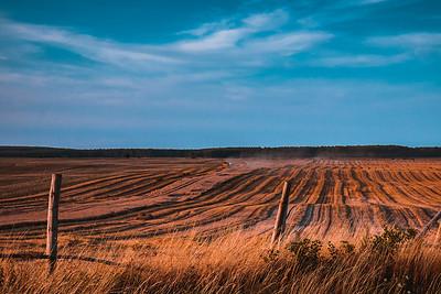 The Field, Strzelce Kajeńskie, Poland