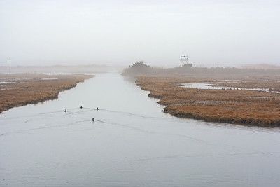 Swim Into The Mist