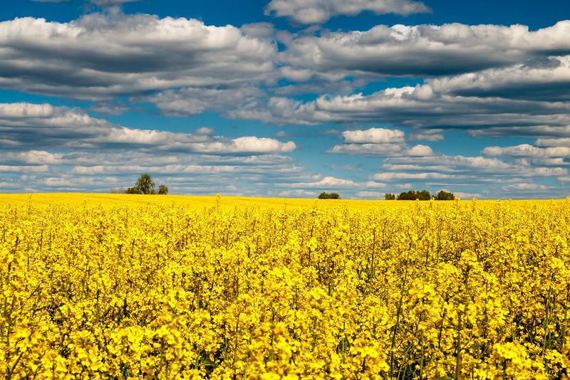 Fields, Poland