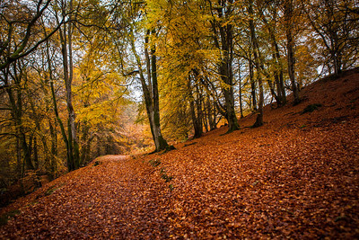 Autumn trees at the Birks of Aberfeldy, Perthshire, Scotland.