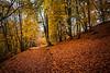 Autumn trees at the Birks of Aberfeldy, Perthshire, Scotland.
