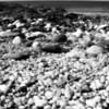 White Beach (Infrered)