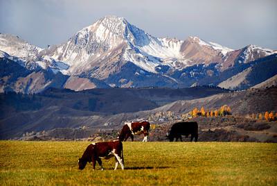 Mount Daily from McLain Flats. Aspen Colorado