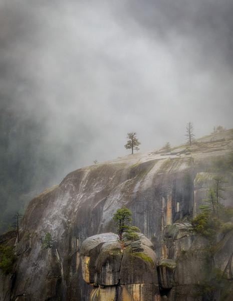 Tiny Tree in Mist, YNP