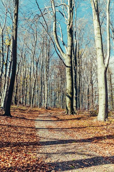 Bükki Nemzeti Park, Hungary