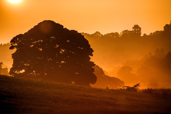 Early morning near Pooley Bridge, Ullswater in the Lake District.