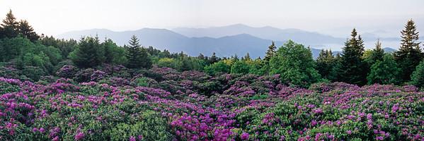 Dawn at Roan Mountain