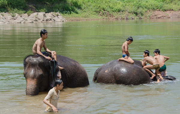 Bathing with the elephants in the Mekong