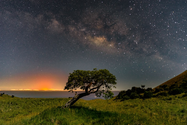 Mauna Kea Tree View of the Eruption