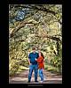 Canopy of Romance
