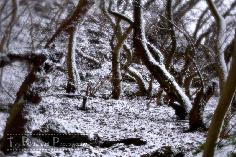 Lost In The Woods No.30 - Number One Plus Snow