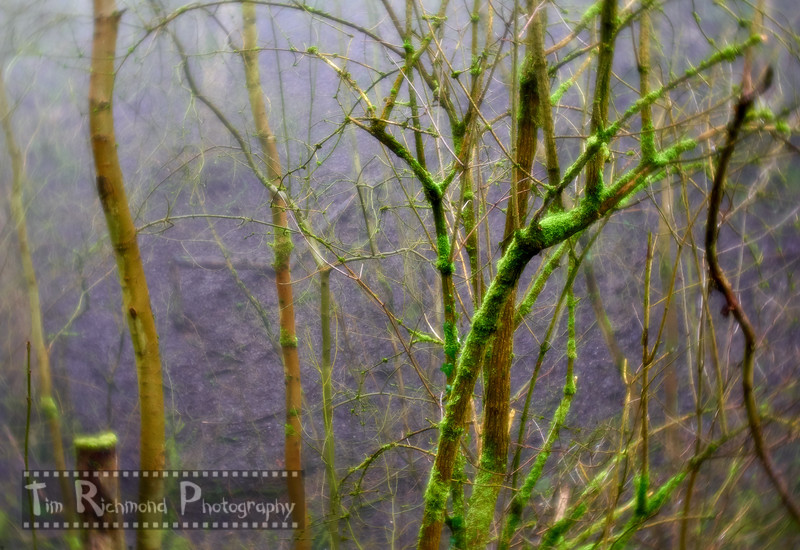 Lost In The Woods No.8  -  Moss & Mist