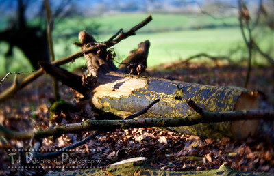 Lost In The Woods No.43 - Uprooted