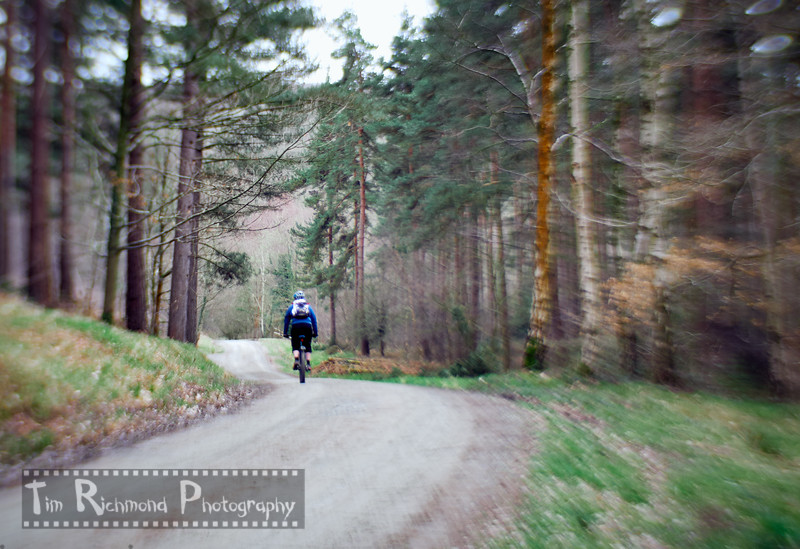 Lost In The Woods No.50 - The Lone Rider