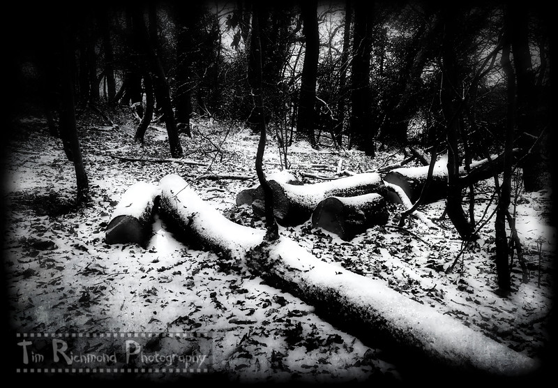 Lost In The Woods No.44 - A Light Dusting