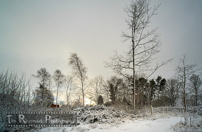 Lost In The Woods No.38 - and then there was snow......