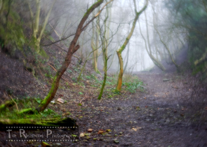 Lost In The Woods No.7