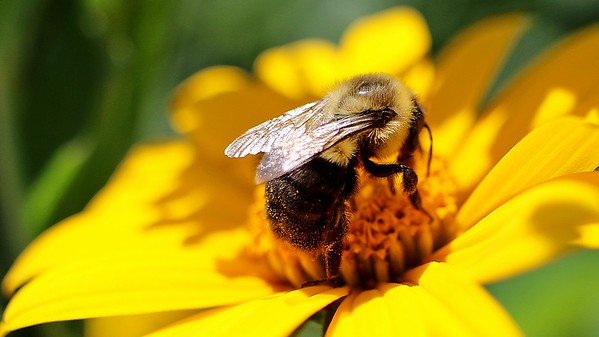 Sunny Bee (2)
