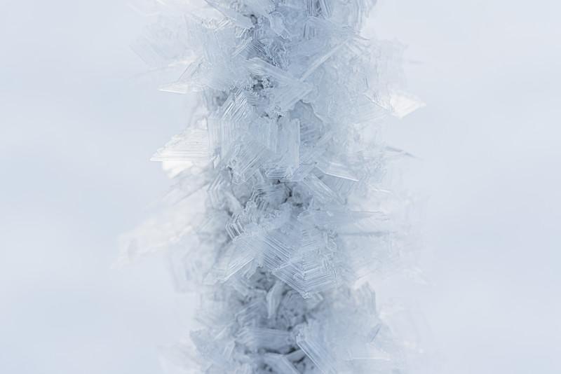 Cold twig