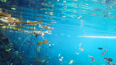 Underwater view in a pond.