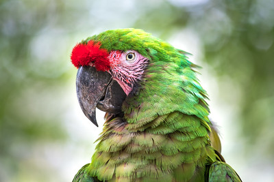 Tropical bird close-up.