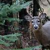 One Buck