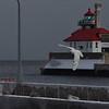 Ivory Gull @ Duluth Entry Light House