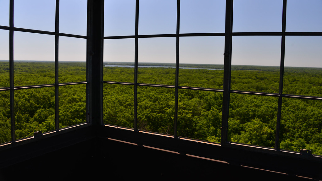 Fire Tower View.